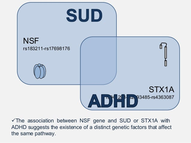 STX1A SERT DAT NET STX1A regulates the DAT-mediated amphetamine-induced efflux, which suggests that altered STX1A function...