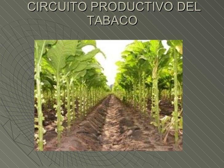 Circuito Productivo Del Tomate : Circuito productivo del tabaco y el algodon
