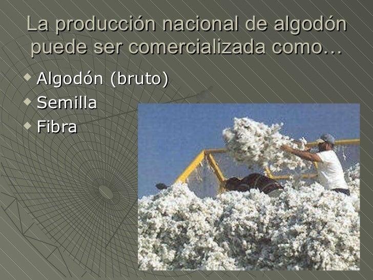 Circuito Productivo Del Vino : Circuito productivo del tabaco y el algodon