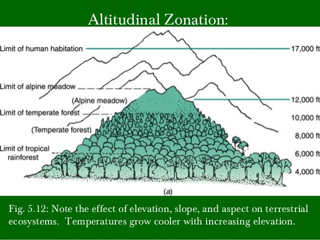 effects of macroalgal zonation on a Zonation patterns of macroalgal assemblage in general are recognized to be the result of the effects of biological factors such as competition and grazing as well as physical factors such as wave action, ae-rial exposure, irradiance, temperature range and time.