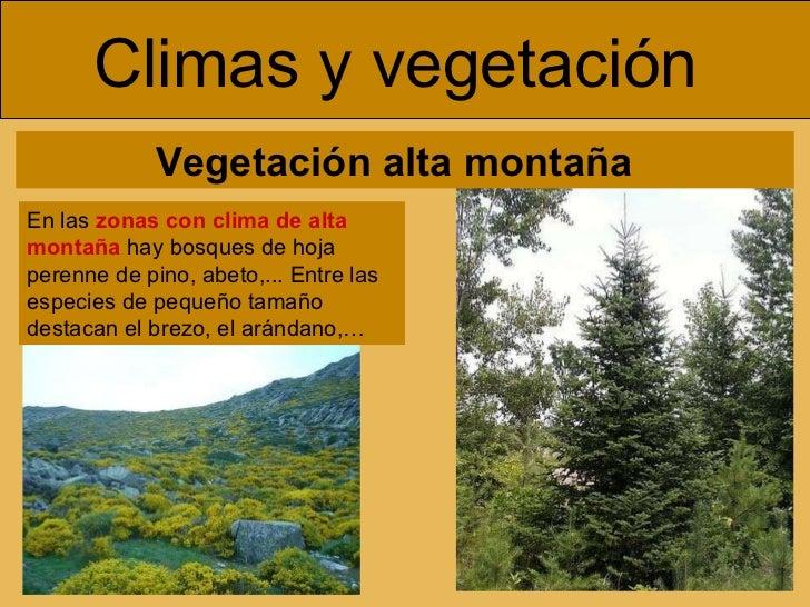 Geograf a de espa a for Arboles de hoja perenne para clima continental