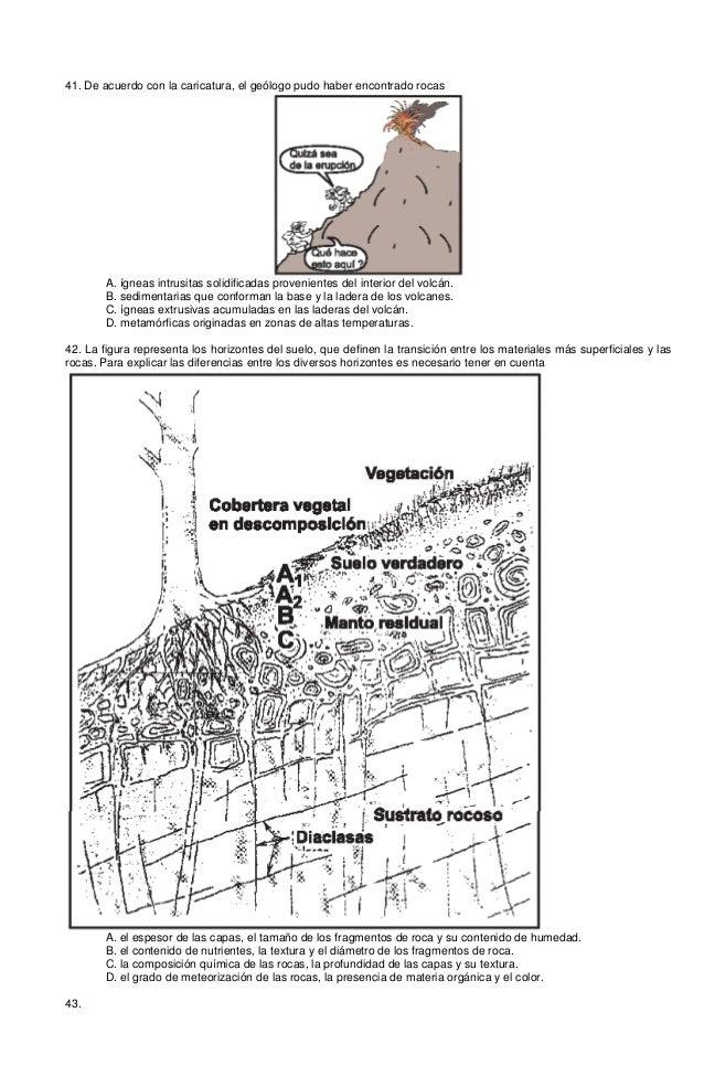 41. De acuerdo con la caricatura, el geólogo pudo haber encontrado rocas A. ígneas intrusitas solidificadas provenientes d...