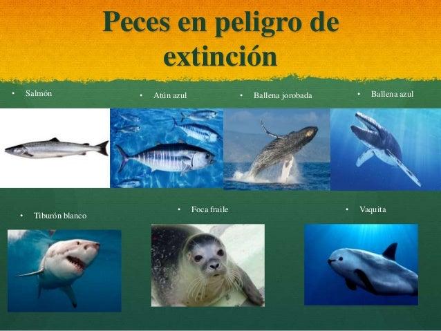 Geografia animales en peligro de extincion en panam for Peces que se cultivan en estanques en panama