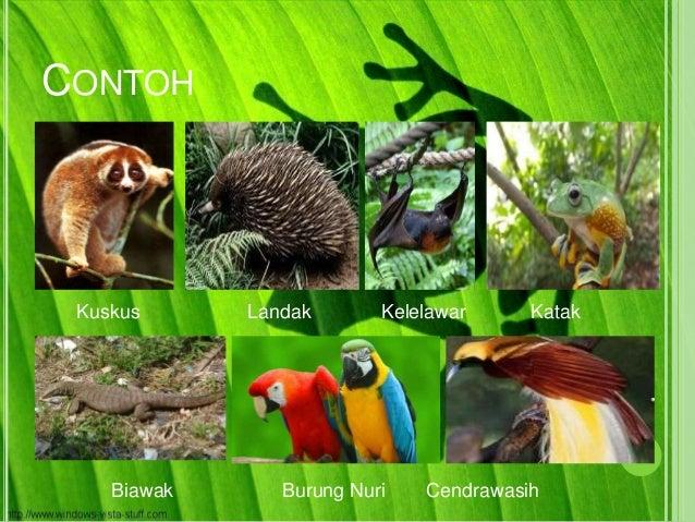 51 Koleksi Gambar Flora Fauna Indonesia Bagian Barat Gratis Terbaru