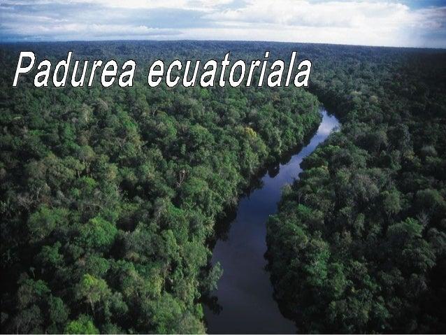 Padurea ecuatoriala• este o pădure care este totdeauna verde• se găseşte în zonele calde şi umede ale    tropicelor la o a...