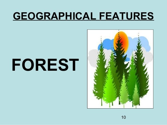 10 GEOGRAPHICAL FEATURES FOREST