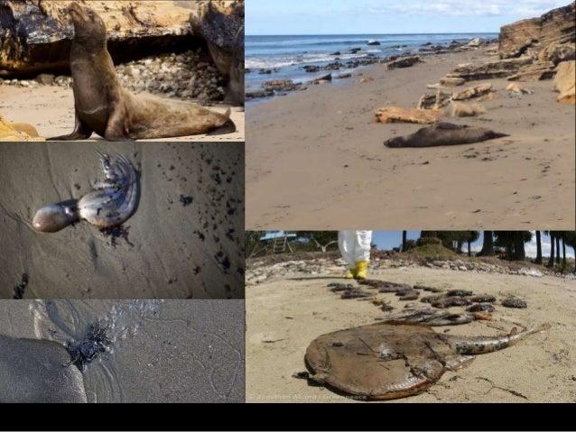 Water Pollution/Oil Spills