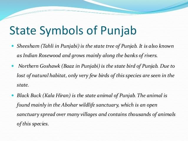Geography Of Punjab