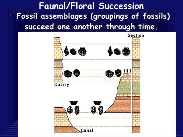 faunal succession geology