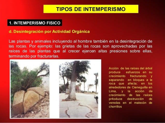 TIPOS DE INTEMPERISMO d. Desintegración por Actividad Orgánica Las plantas y animales incluyendo al hombre también en la d...