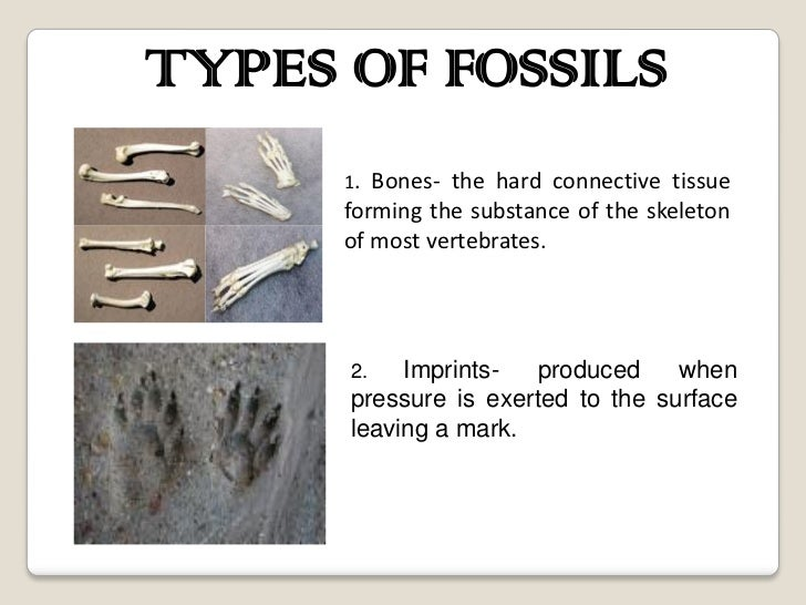 What Is The Way Of Dating Fossils