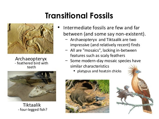 fossil mature singles The dating rocks and fossils using geological methods article in nature's excellent scitable series of online articles in the nature education knowledge project 2.