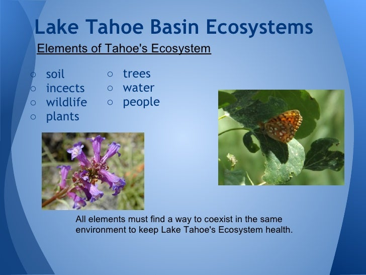 the endangered ecosystem of lake tahoe basin The lake tahoe aquatic invasive species coordination committee july 31   management plan and manages ais issues in the tahoe basin  recreational  pursuits are currently threatened by the unwanted effects of non-native aquatic.