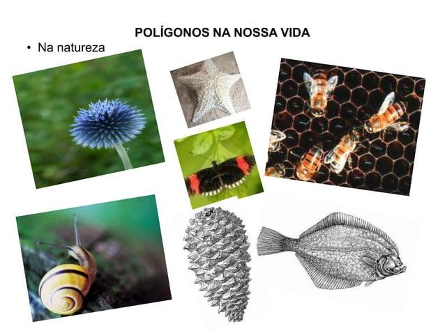 POLÍGONOS NA NOSSA VIDA• Na natureza