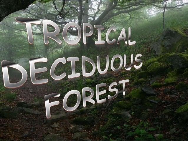 Natural vegetation and wild life