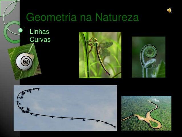 Geometria na NaturezaLinhasCurvas