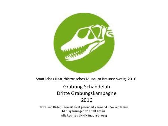 Staatliches Naturhistorisches Museum Braunschweig 2016 Grabung Schandelah Dritte Grabungskampagne 2016 Alle Rechte : SNHM ...