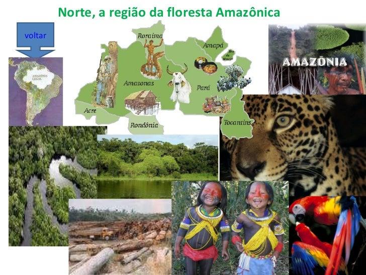 Norte, a região da floresta Amazônica voltar