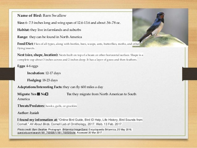 Georgia birds field guide by Ms. Peacock's and Mrs ...