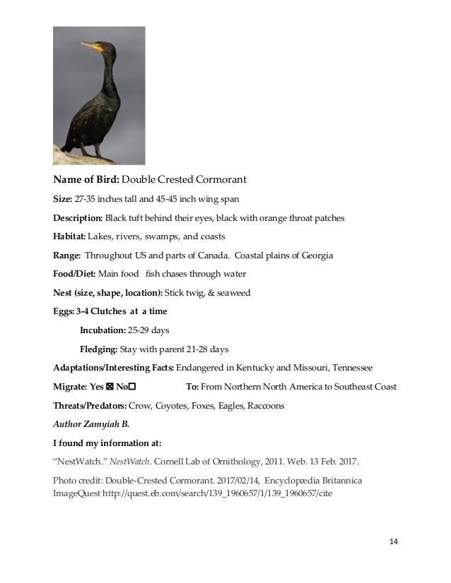 http allaboutbirds.org guide western_screech-owl sounds