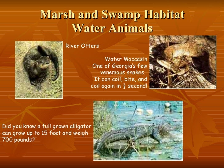 adaptive features of plants and animals in marsh habitat Features of biomes (gr4) our goals students will be able to: ➢ recognize a marsh wetland habitat ➢ observe the plant profile at the edge of the lake ➢ observe biodiversity ➢ record observations showing this biodiversity ➢ recognize that marsh plants and animals have adaptations to their habitat program.