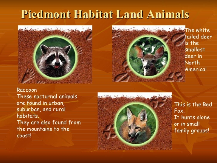 Georgia habitats for Animals that live in soil for kids