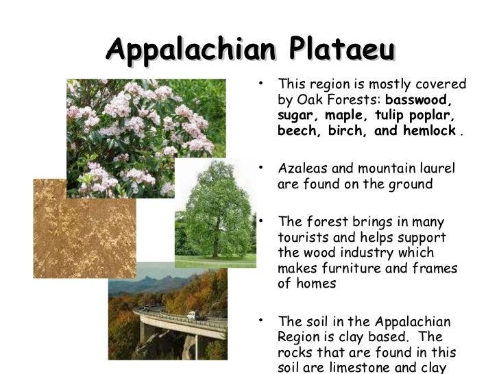 Appalachian Plataeu <ul><li>This region is mostly covered by Oak Forests:  basswood, sugar, maple, tulip poplar, beech, bi...