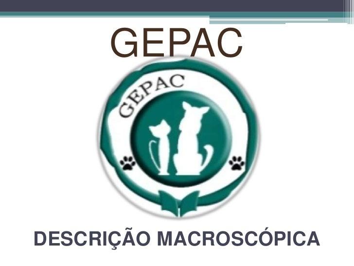 GEPACDESCRIÇÃO MACROSCÓPICA<br />