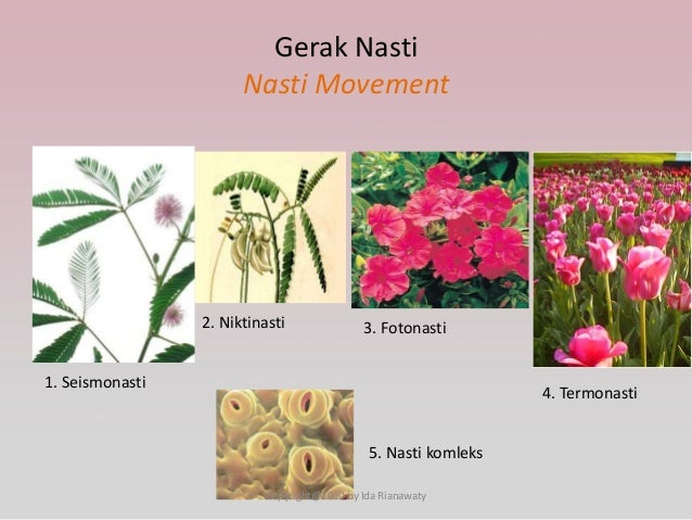 Image result for gerak nasti