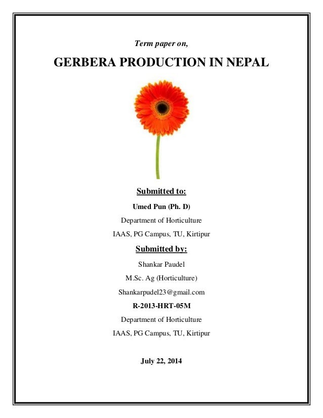 Term paper on, GERBERA PRODUCTION IN NEPAL Submitted to: Umed Pun (Ph. D) Department of Horticulture IAAS, PG Campus, TU, ...