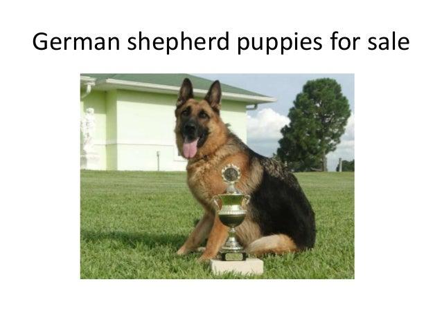 Florida Dog Breeders