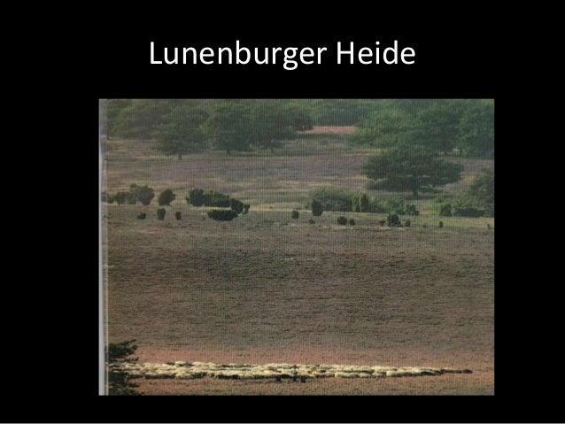 Lunenburger Heide
