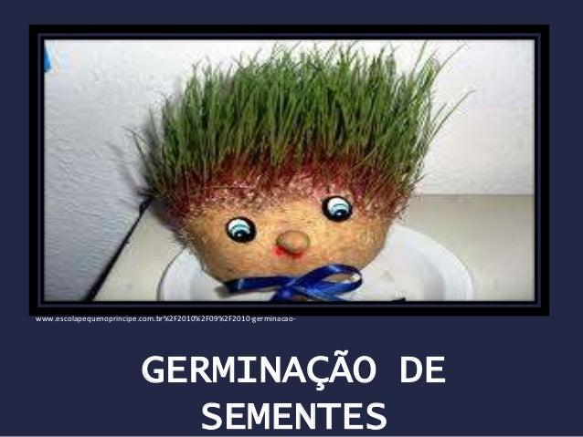 GERMINAÇÃO DE SEMENTES www.escolapequenoprincipe.com.br%2F2010%2F09%2F2010-germinacao-