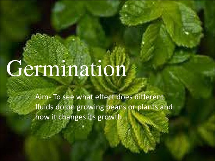 GerminationGermination  Aim- To see what effect does different  fluids do on growing beans or plants and  how it changes i...
