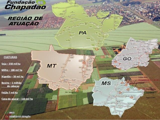 Manejo de Insetos nas cultura de soja, milho e algodão na Região de Goiás e Mato Grosso do Sul: realidade e preocupações Slide 2