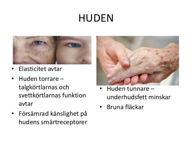 läran om huden