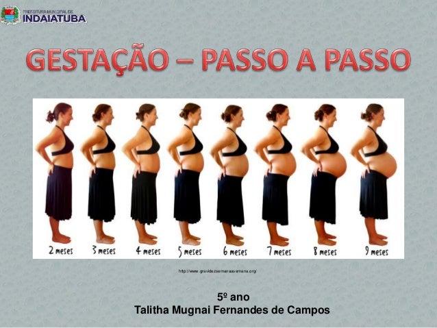 http://www.gravidezsemanaasemana.org/ 5º ano Talitha Mugnai Fernandes de Campos