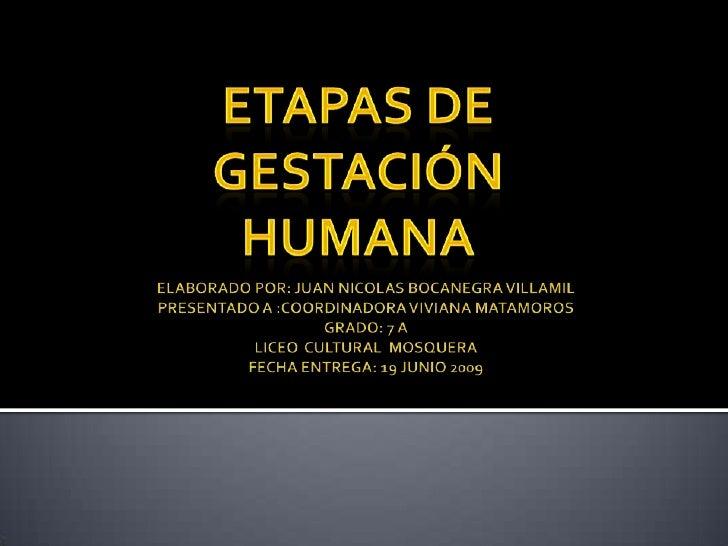 ETAPAS DE gestación <br />humana<br />ELABORADO POR: JUAN NICOLAS BOCANEGRA VILLAMILPRESENTADO A :COORDINADORA VIVIANA MAT...