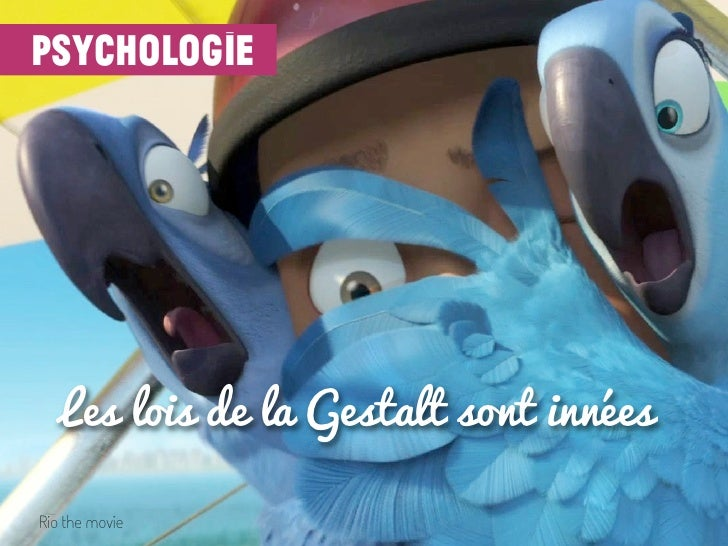 psychologie   Les lois de la Gestalt sont innéesRio the movie