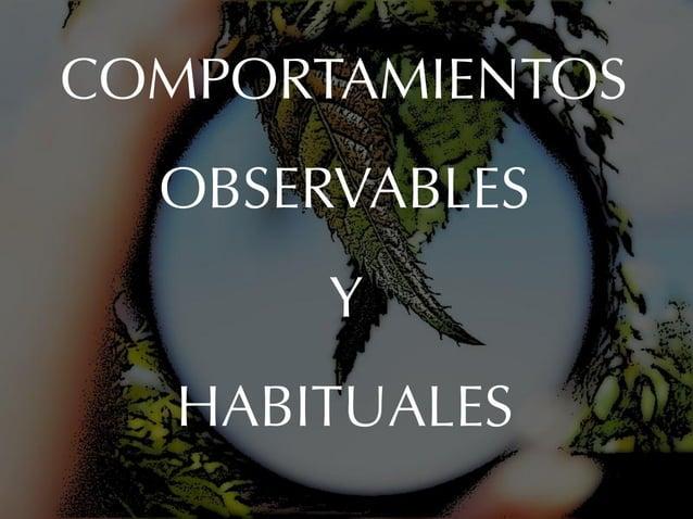 COMPORTAMIENTOS  OBSERVABLES       Y   HABITUALES