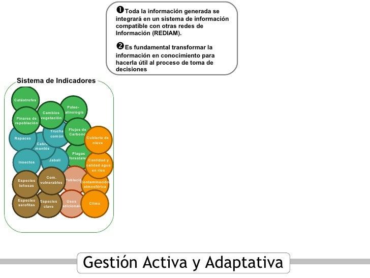 Sistema de Indicadores  Toda la información generada se integrará en un sistema de información compatible con otras redes...