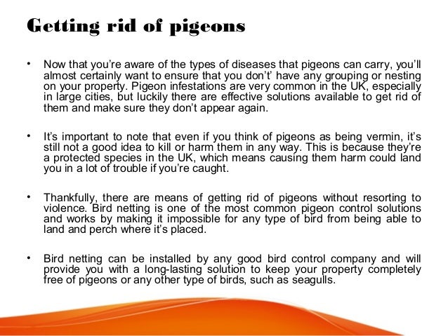 What are some ways to get rid of pigeons?