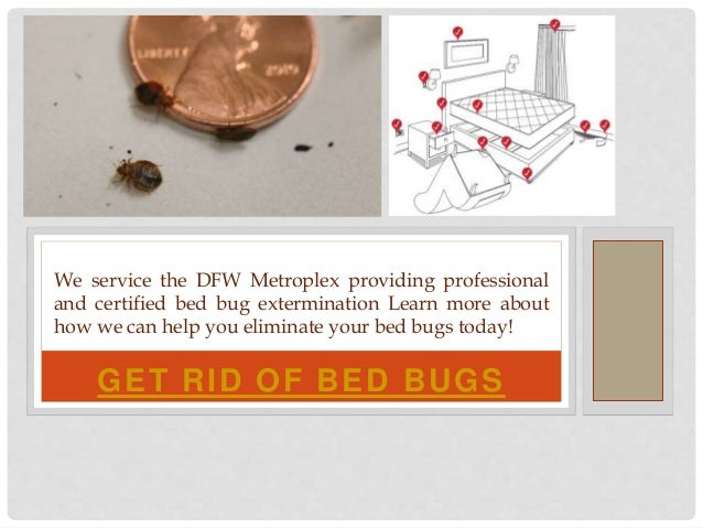 GET RID OF BED BUGS We service the DFW Metroplex providing professional and certified bed bug extermination Learn more abo...