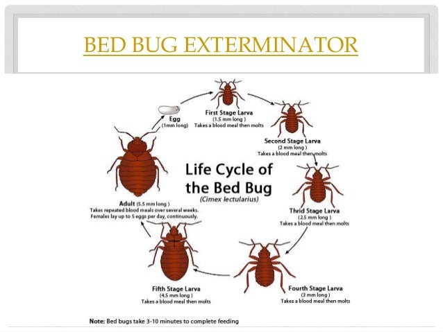 How To Get Rid Of Bed Bugs In Headboard