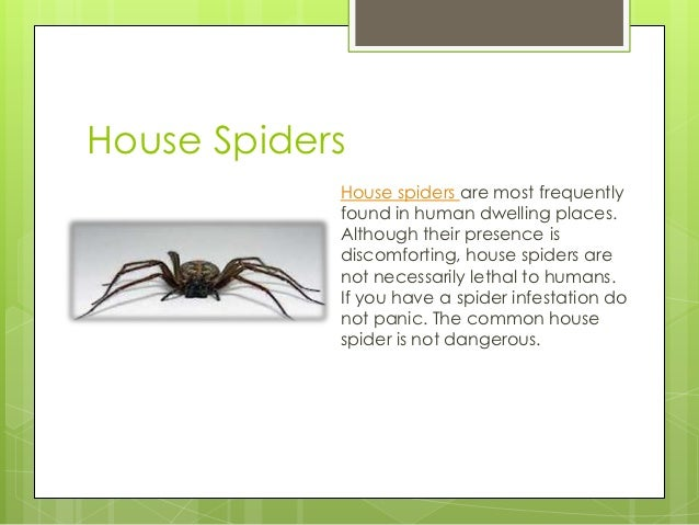 Getting Rid Spiders Fighting The Infestation That May Be