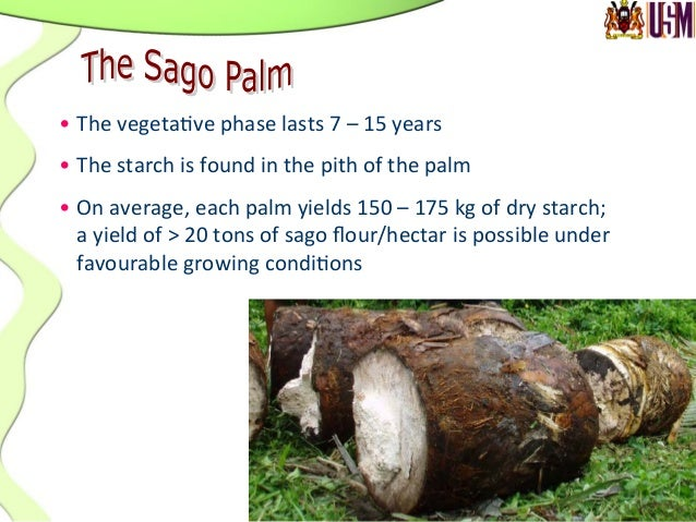 Growth stage Estimated agefrom planting (year) Palm description Plawei 10 Palms that have reached maximum vegetative grow...