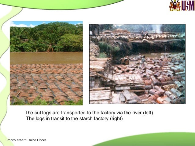 Photo  credit:  Prof.  Toyoda,  Tokyo  University      Water  is  added  to  the  rasped  mixtur...