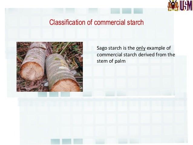 Comparison of starch yield Crop   Yield     (tons/ha)    per  year   Sago   24   Rice   6.6   Corn ...