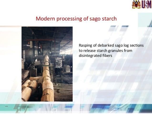 Sago granules under light microscope (x40) Iodine stained granules in sago fiber (x10) Iodine stained sago granules in sac...