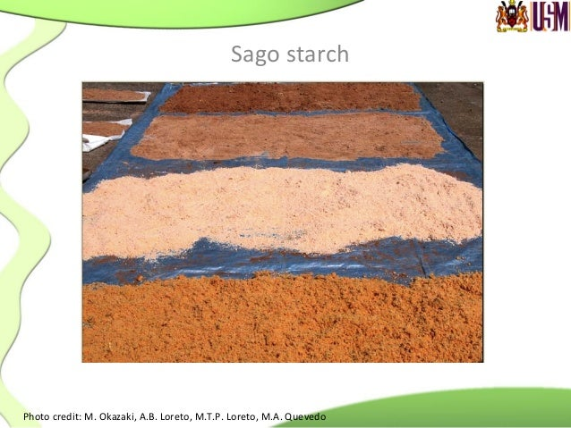 Sago  starch   Native  sago  starch  granules            Broad  granule  size   distribu.on  (10...